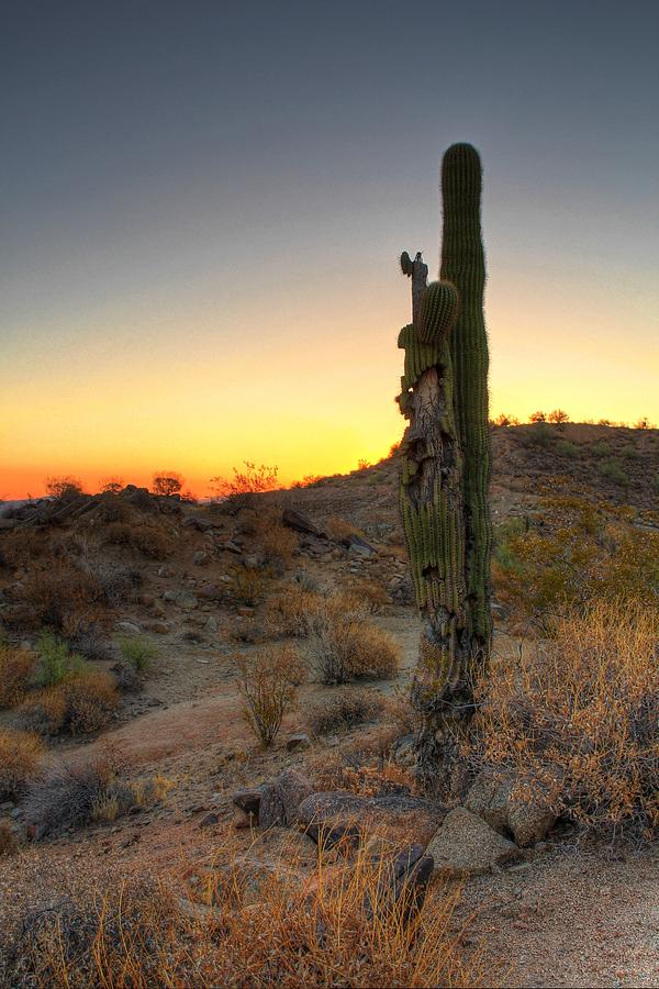 Old Cactus Sunrise by Dan Stone