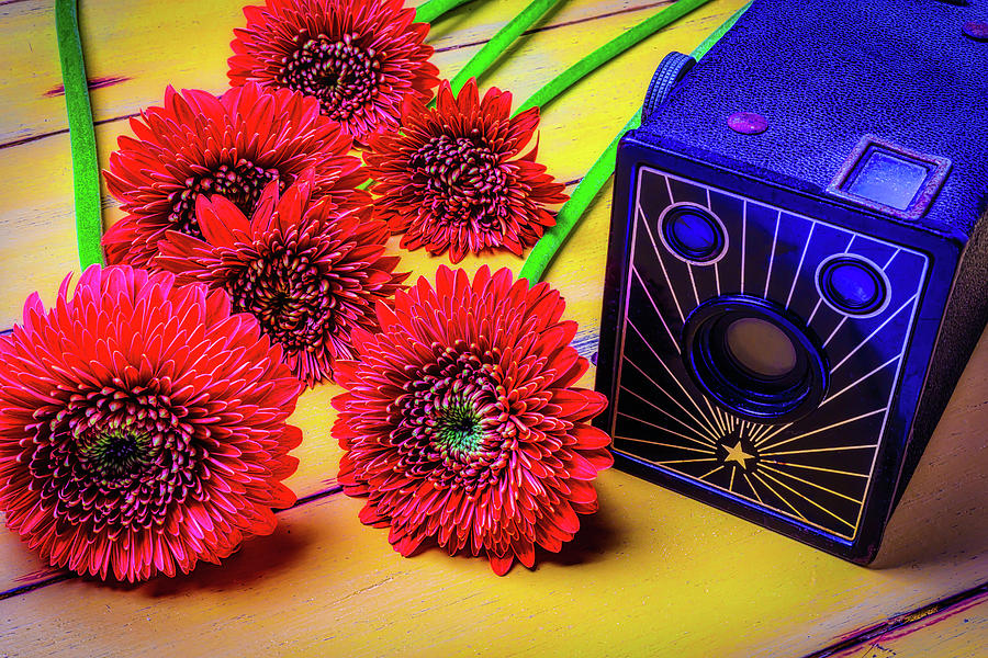 Mood Photograph - Old Camera And Dasies by Garry Gay