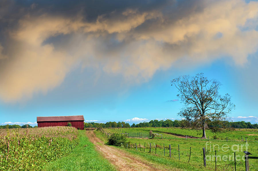 Old country dirt road leading to a red barn on a Maryland farm by Patrick Wolf