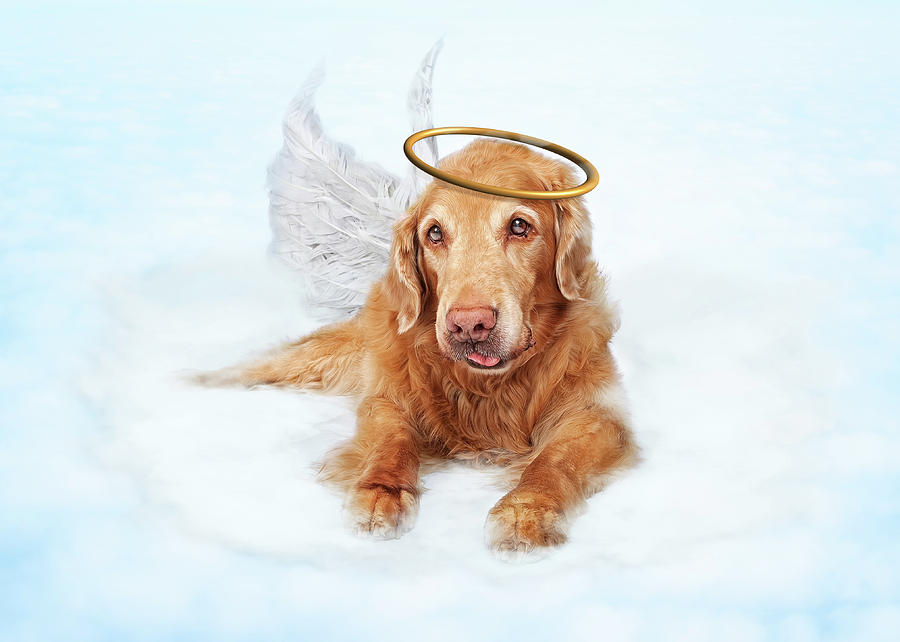 Old Dog Angel On Cloud In Heaven Photograph