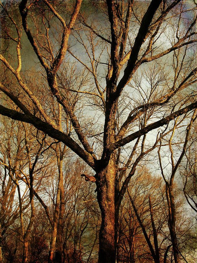 Tree Photograph - Old Faithful by Amy Tyler