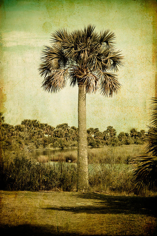 Palm Tree Beach Tapestry