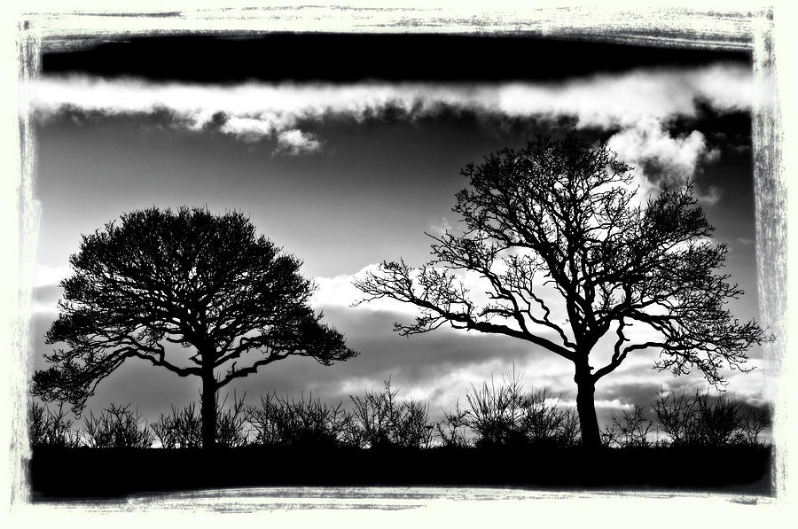 Silhouette Photograph - Old Friends by Mark Denham
