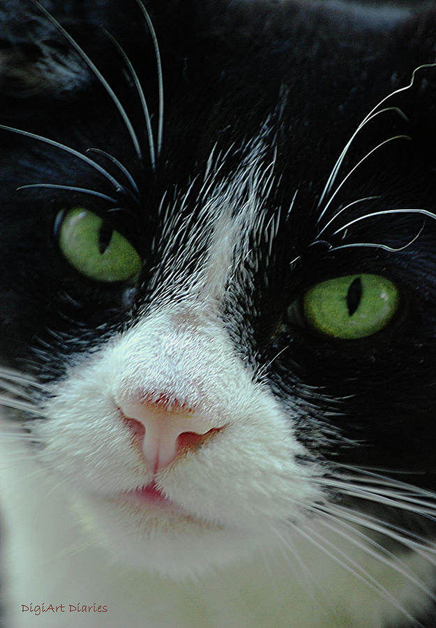 Cat Digital Art - Old Green Eyes by DigiArt Diaries by Vicky B Fuller
