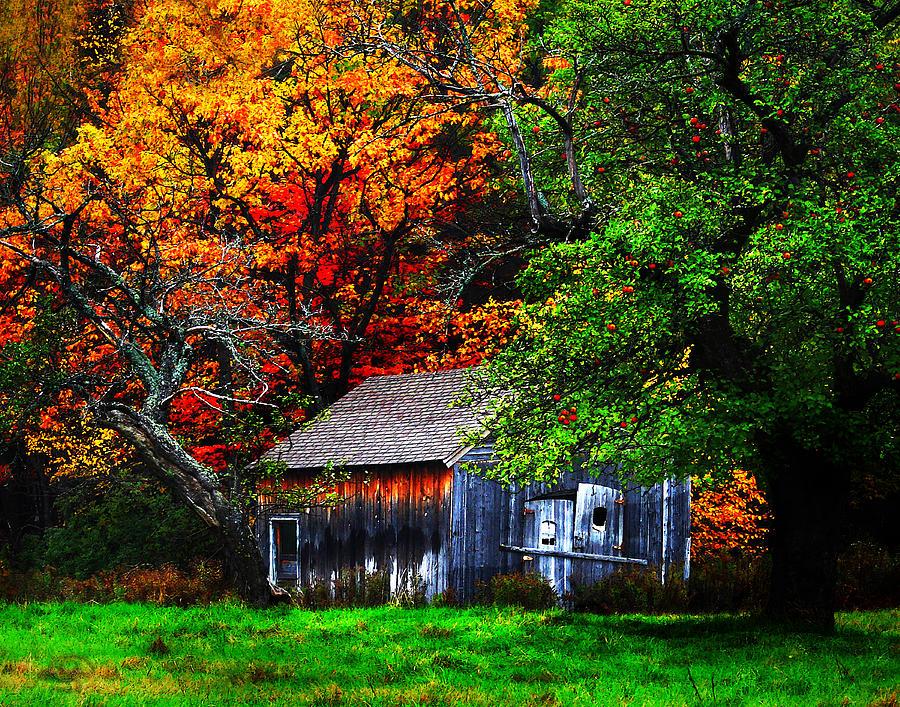 Autumn Digital Art - Old Homestead And The Apple Tree by Vicki Lea Eggen