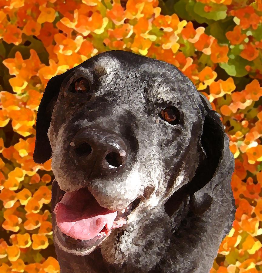 Labrador Retreiver Painting - Old Labrador by Amy Vangsgard