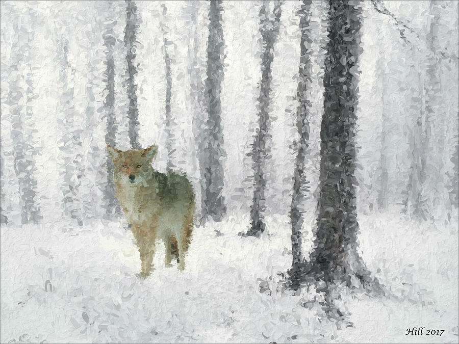 Native American Digital Art - Old Man Coyote by T D Hill