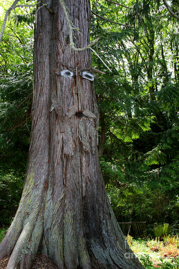 Natural Photograph - Old Man Tree by Robert Nankervis