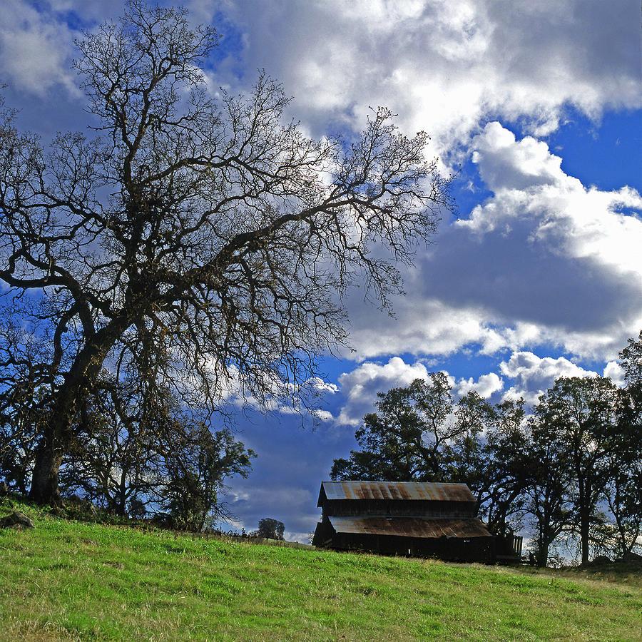Oak Tree Photograph - Old Oak Tree And Barn by Jeffrey  Sinnock