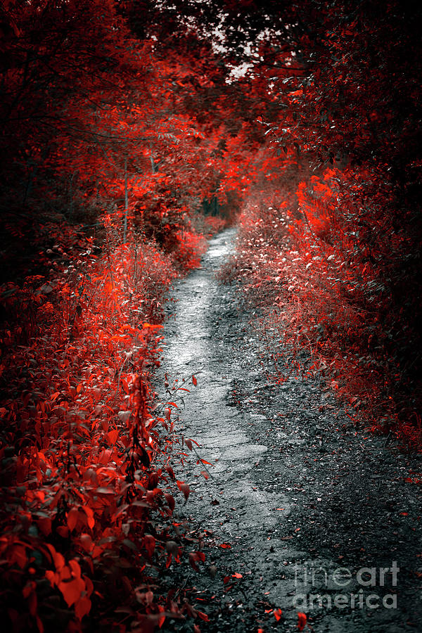 Path Photograph - Old Path In Red Forest by Elena Elisseeva