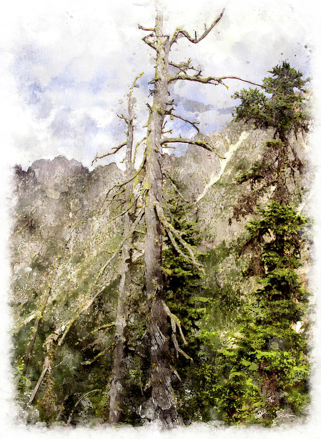 Tree Digital Art - Old Pines Cascades Wc by Peter J Sucy