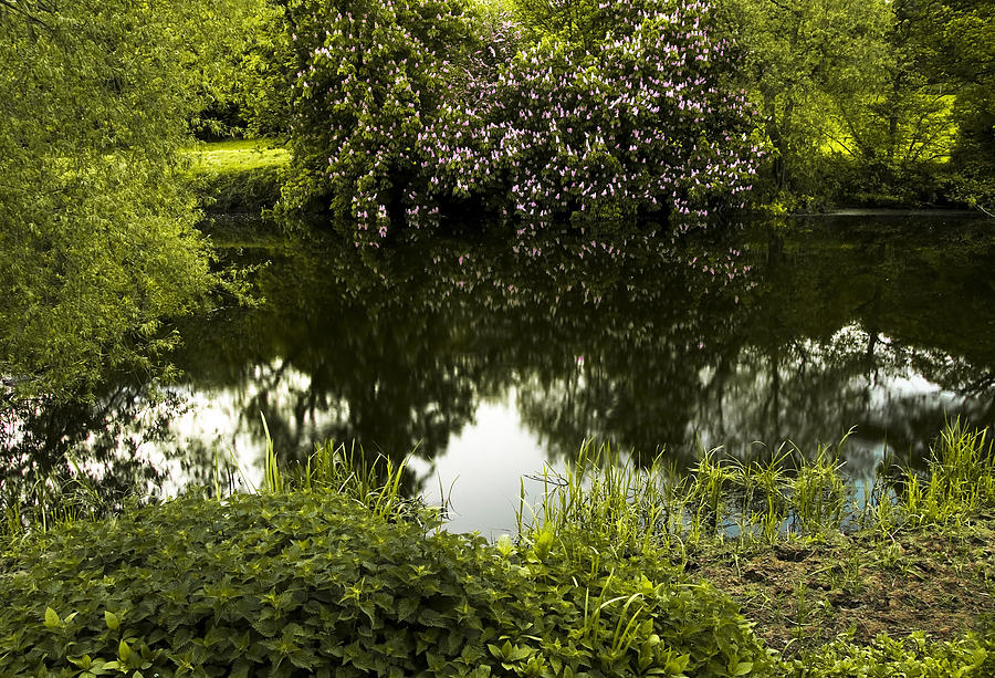 Countryside Photograph - Old Pond by Svetlana Sewell