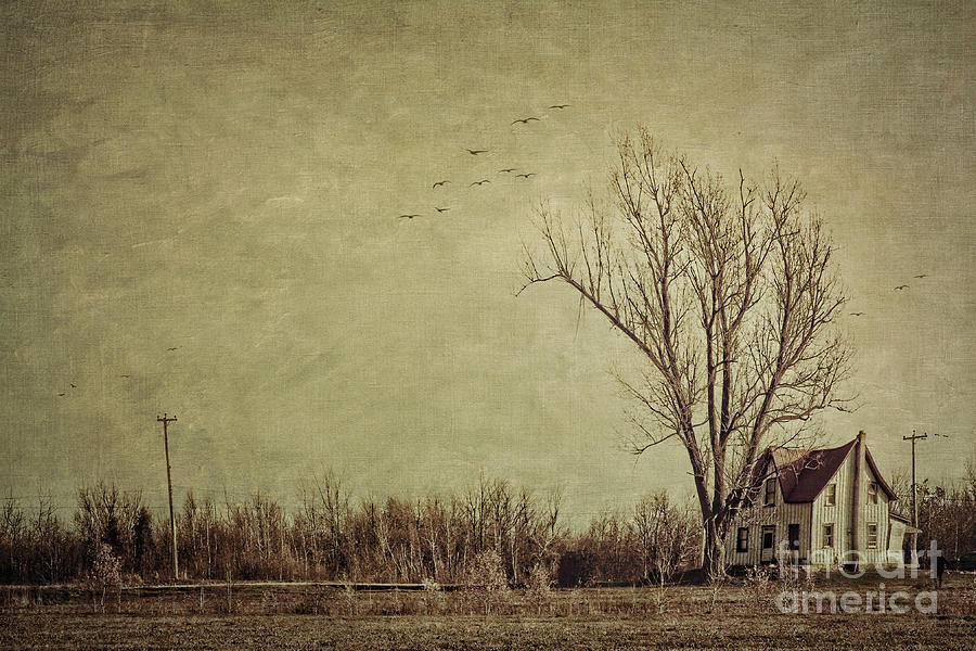 Aged Photograph - Old Rural Farmhouse With Grunge Feeling by Sandra Cunningham