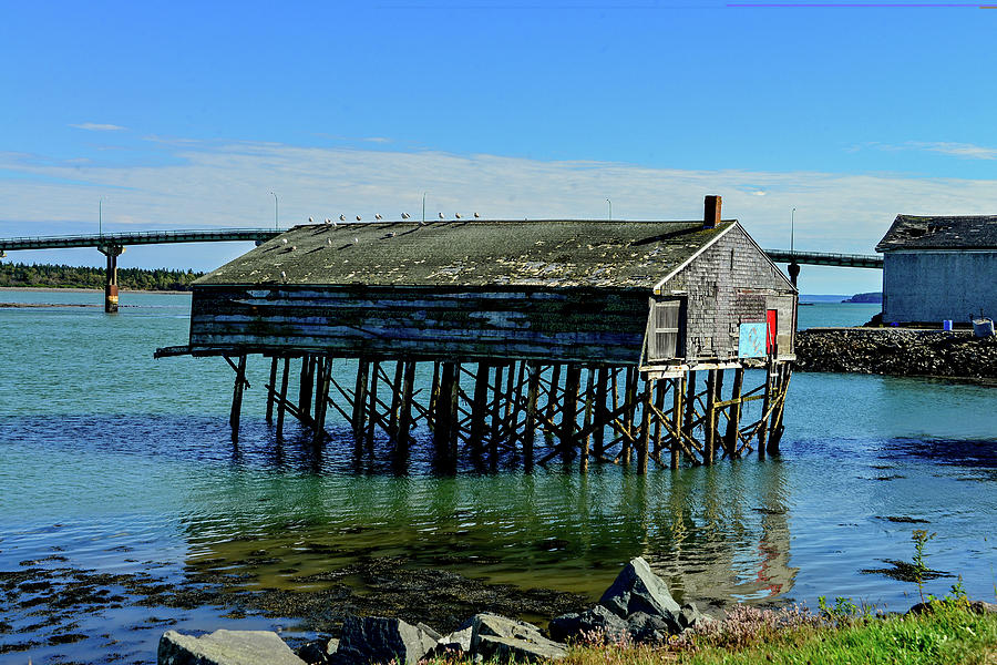 Old Sardine Shack in Lubec, Maine by Marilyn Burton