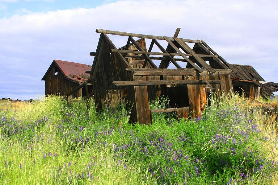 Old Barns Photograph - Old Shack At The Gorge Ba 3000 by Mary Gaines