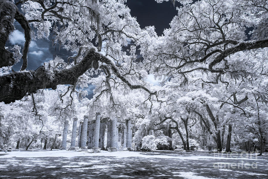 Beaufort Photograph - Old Sheldon Church In Infrared by Charles Hite
