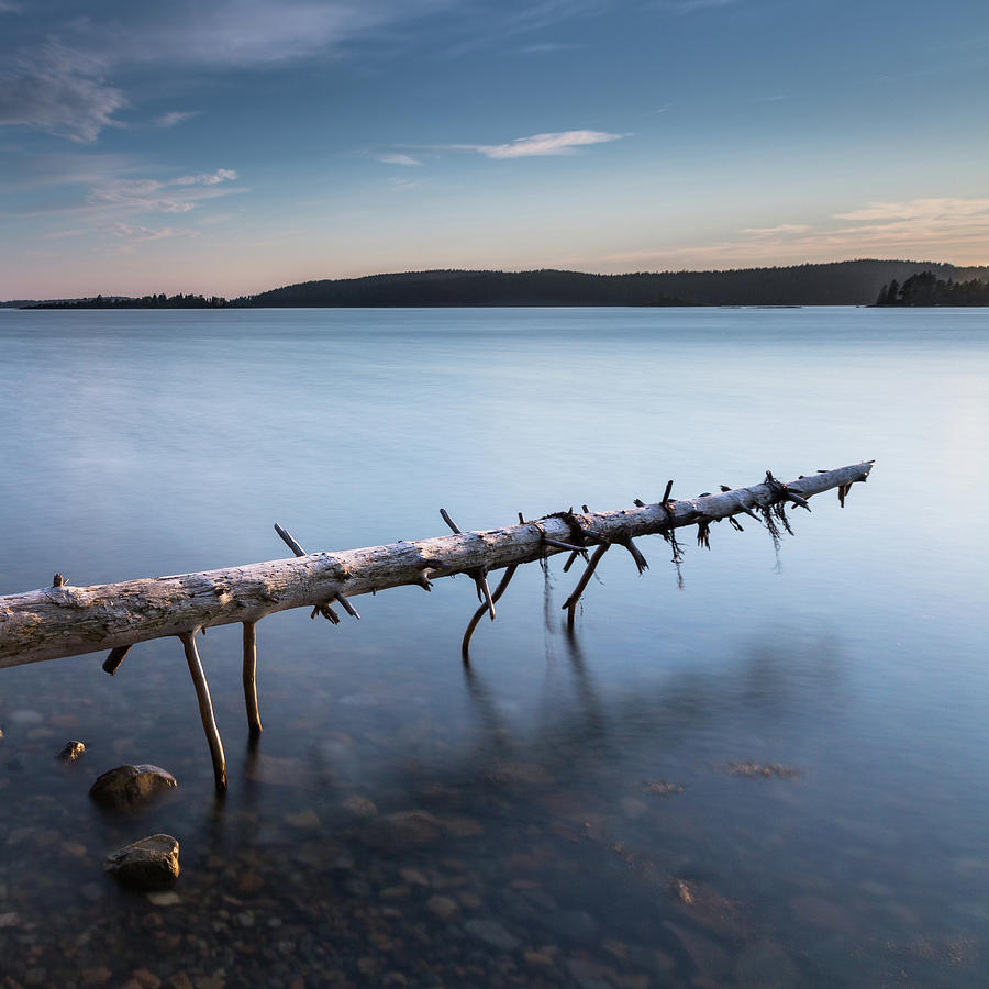 Acadia Photograph - Old Spruce by Arti Panchal