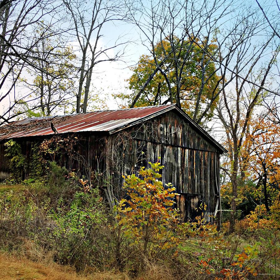 Old Photograph - Old Tobacco Barn by Brenda Conrad