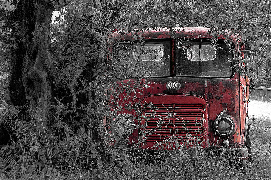 d779cfc244c7 Old Truck Photograph - Old Truck Under Olive Tree In Black And White Plus  Color Red