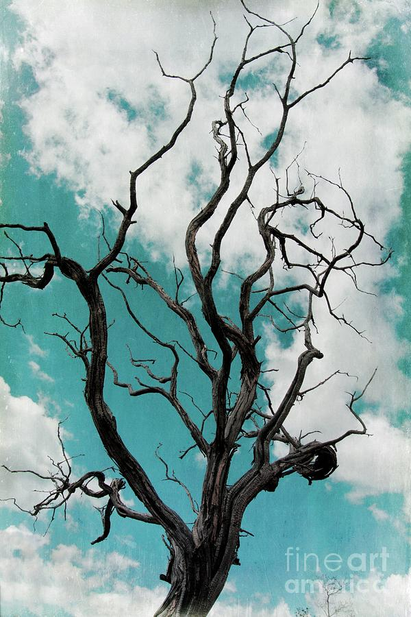 Old Twisted Tree by Patricia Strand