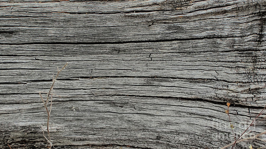 Wood Photograph - Old Weathered Wood Board by David Oppenheimer