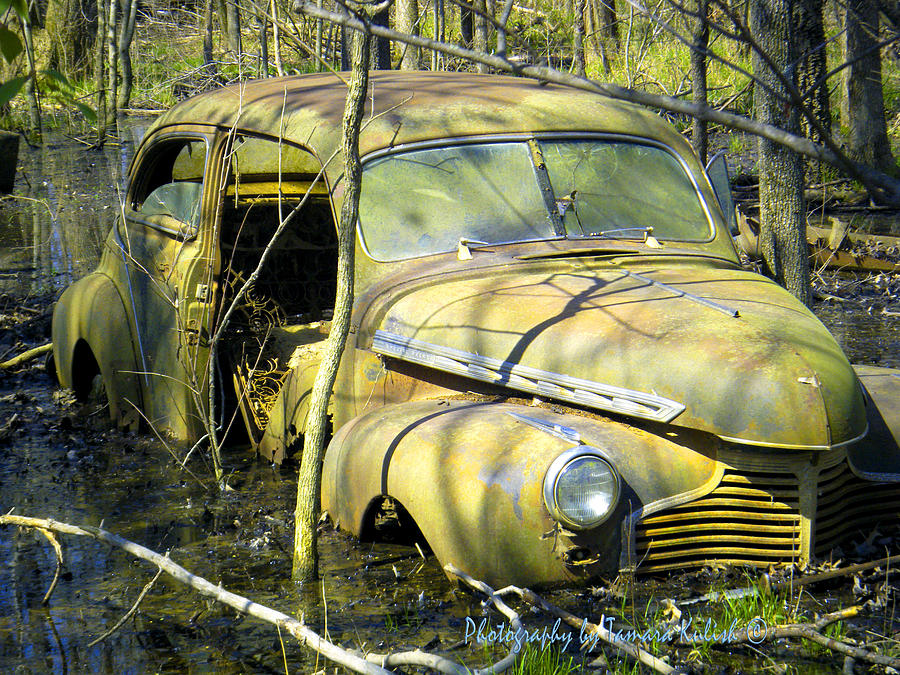 Old Wrecks Submerged In Woods In The Springtime 3 Photograph by ...