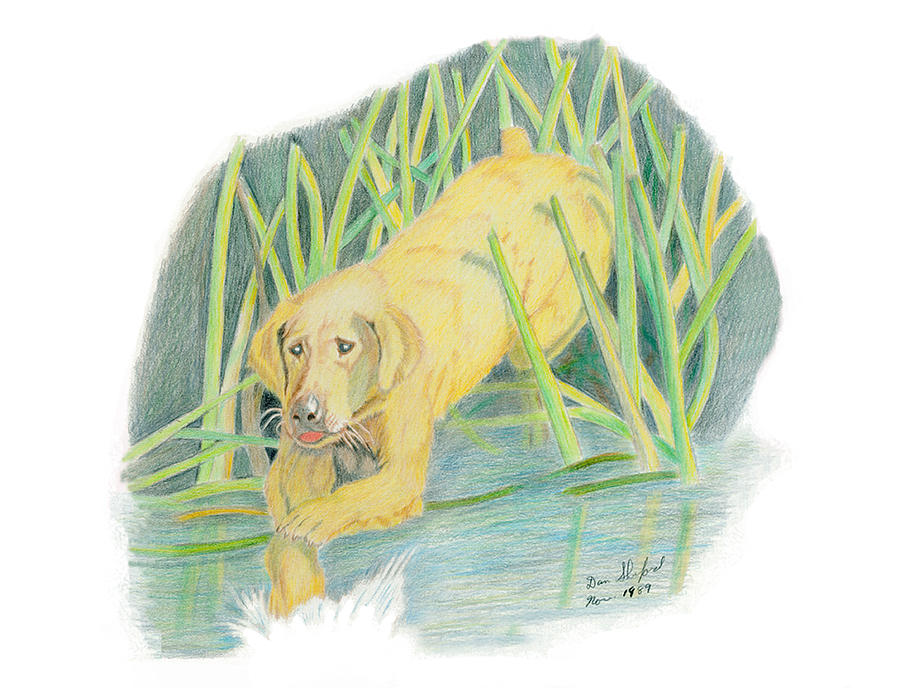 Wildlife Drawing - Old Yeller by Daniel Shuford