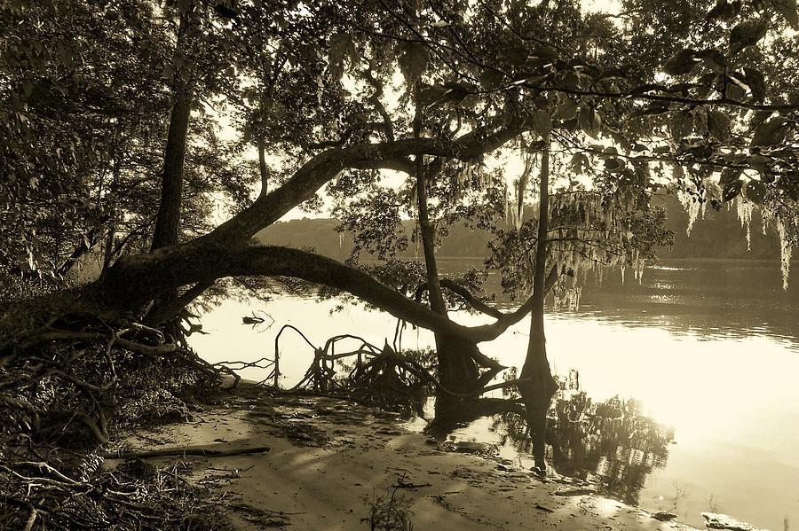 Suwannee Photograph - Ole Suwannee River by Sheri McLeroy