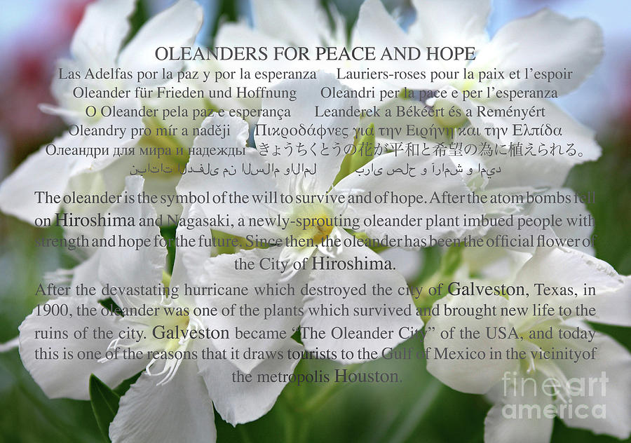 OLEANDERS FOR PEACE AND HOPE by Wilhelm Hufnagl