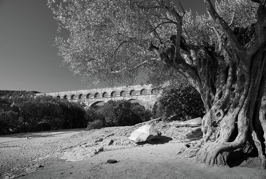 Olive Tree and Pont du Gard, France by Richard Goodrich