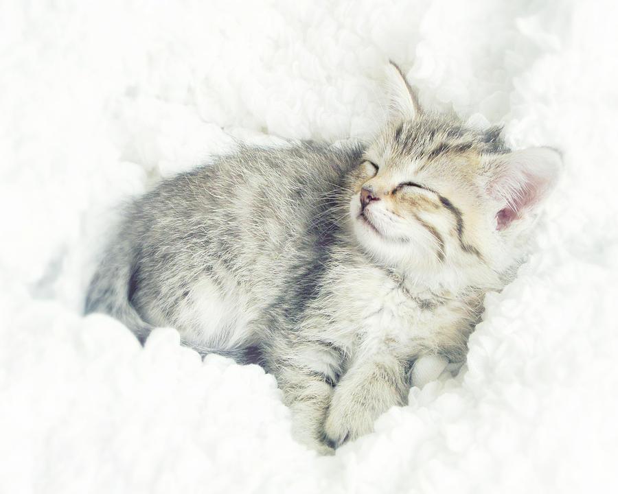 Kitten Photograph - On Cloud Nine by Amy Tyler