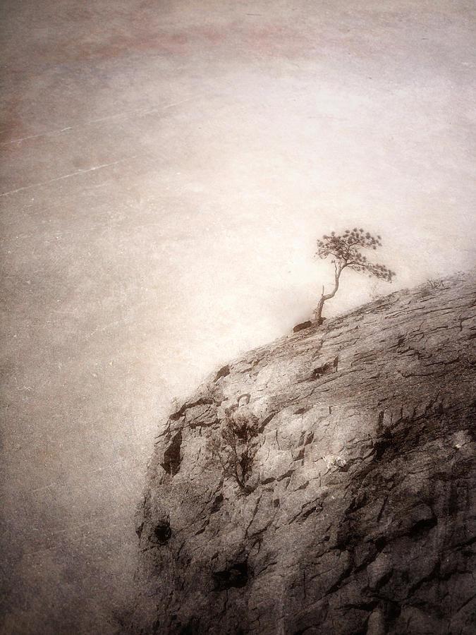 Tree Photograph - On Edge by Tara Turner
