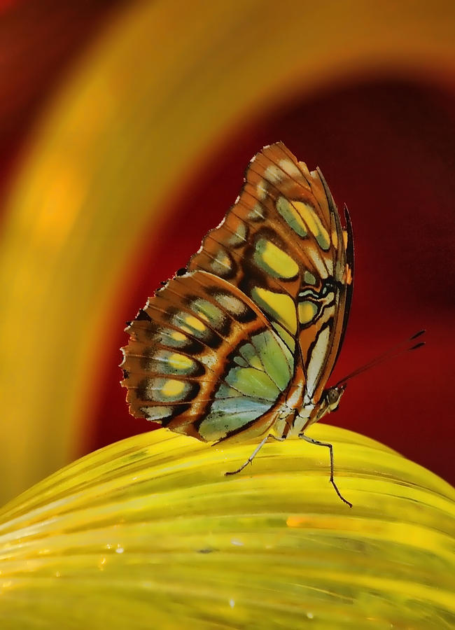 Butterflies Photograph - On Glass by Gaby Swanson