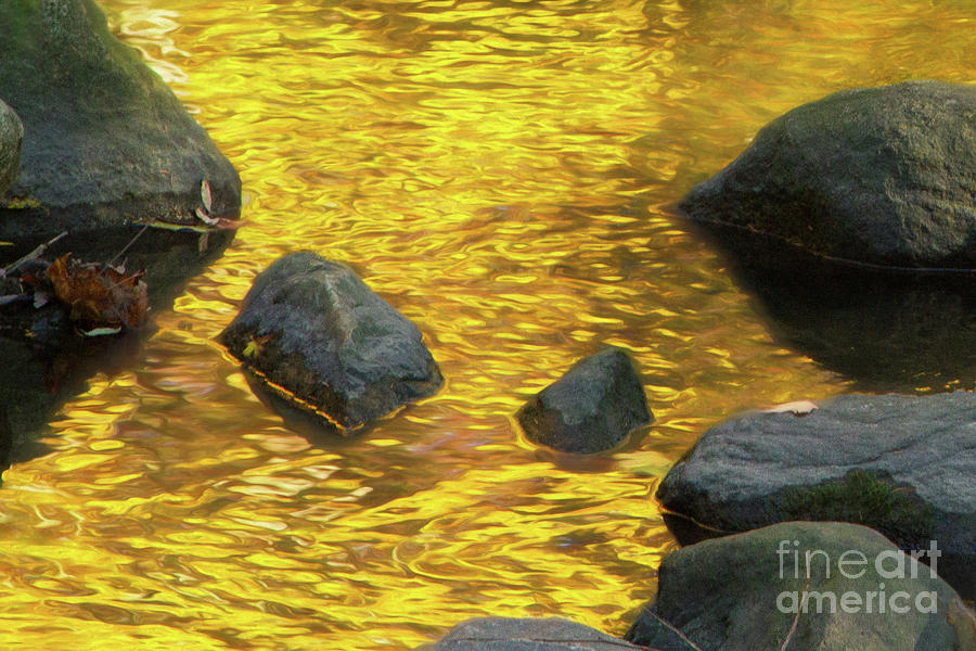 On Golden Pond Photograph by Marilyn Cornwell