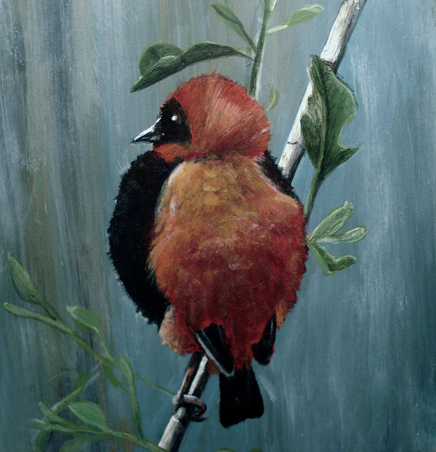 Red Bird Painting - On Safari - Red Biship by Carrie Jackson