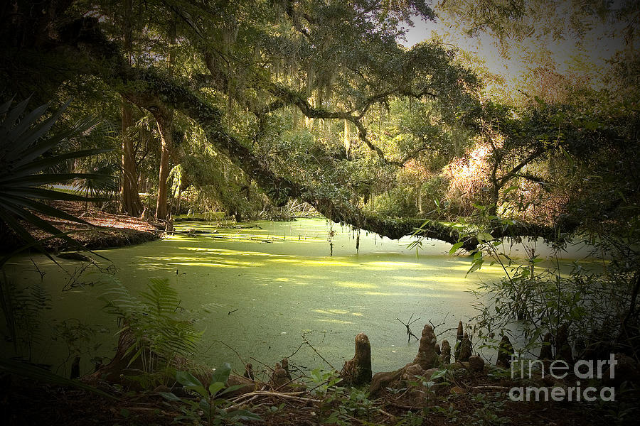 Swamp Photograph - On Swamps Edge by Scott Pellegrin