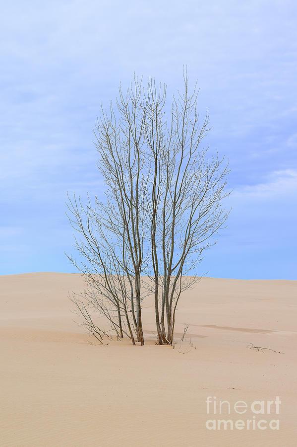 Landscape Photograph - On The Dune by Charles Norkoli