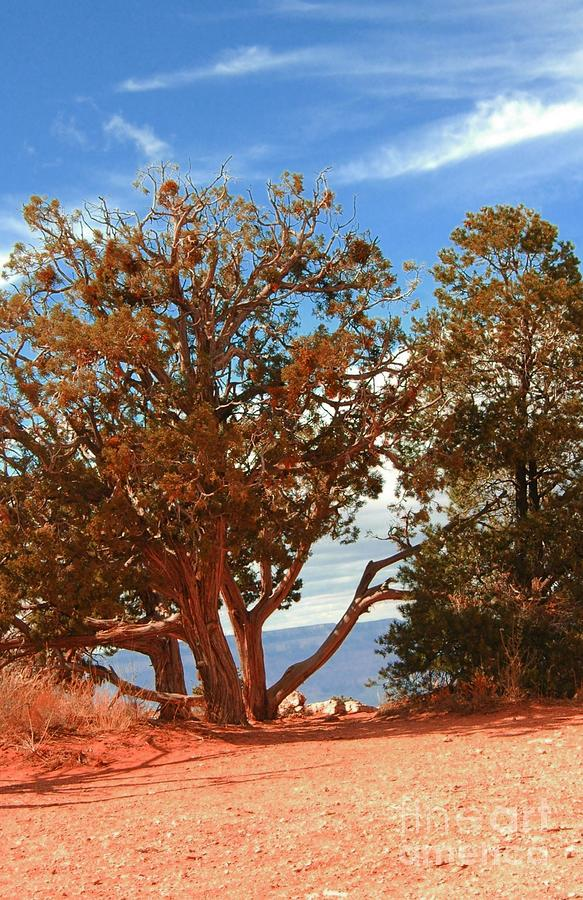 Tree Photograph - On The Edge by Kathleen Struckle