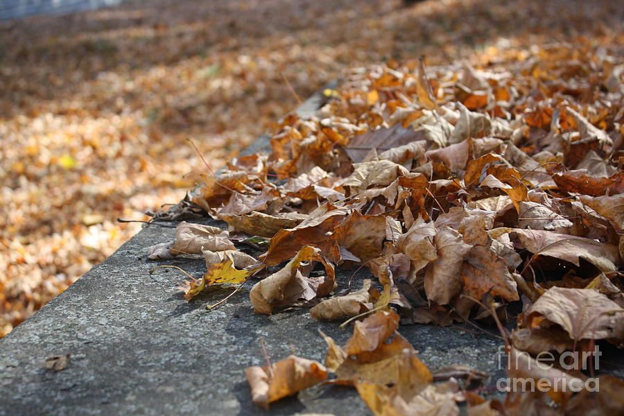 Fall Photograph - On The Edge Of Fall by Monica Smith