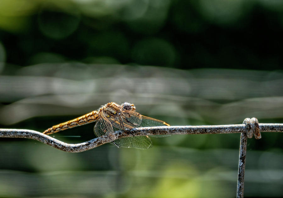On the Fence by Betty Depee