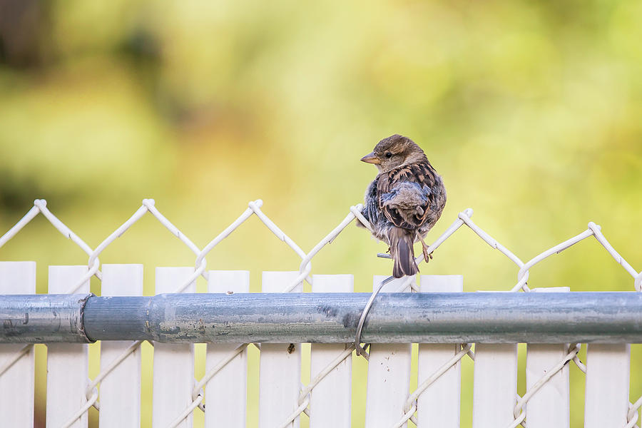 On the Fence by Stan Kwong