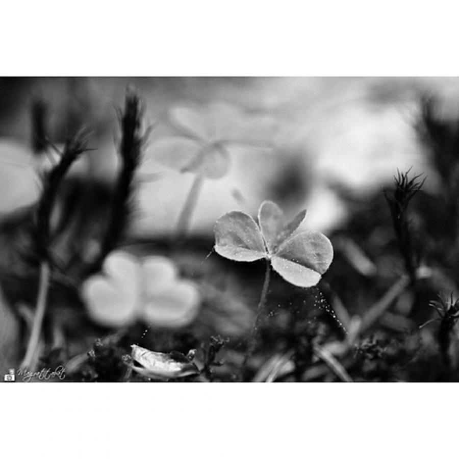 Clover Photograph - On The Forest Floor  #monochrome by Mandy Tabatt