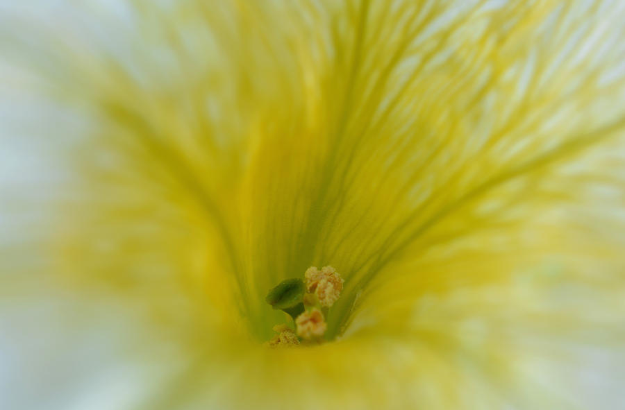 Petunia Photograph - On The Inside by Richard Andrews