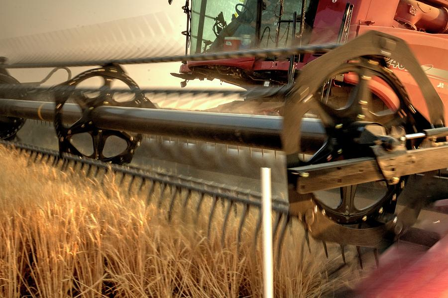 Wheat Photograph - On The Move 1382 by Jerry Sodorff