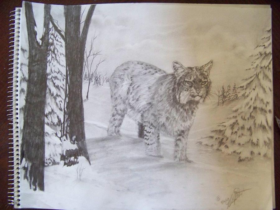 Wildlife Drawing - On The Prowl by Wanda Alberta