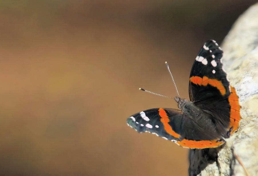 Butterfly Photograph - On The Rocks by Karol Livote
