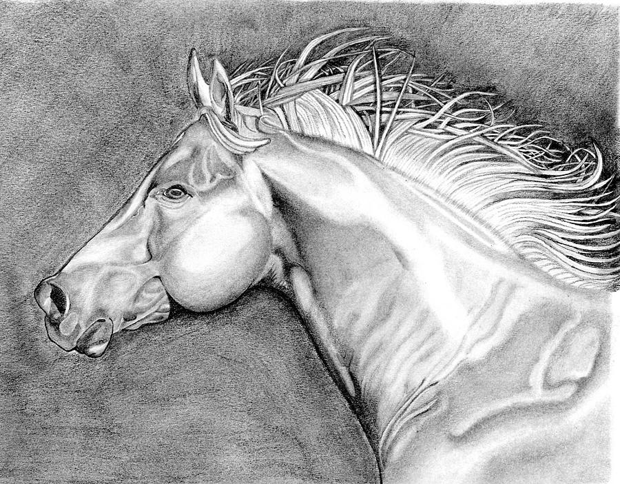 Horse Drawing Drawing - On The Run by Robert Wilson