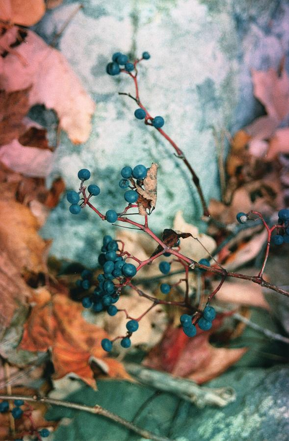 Fall Photograph - On The Vine by Jennifer Toth