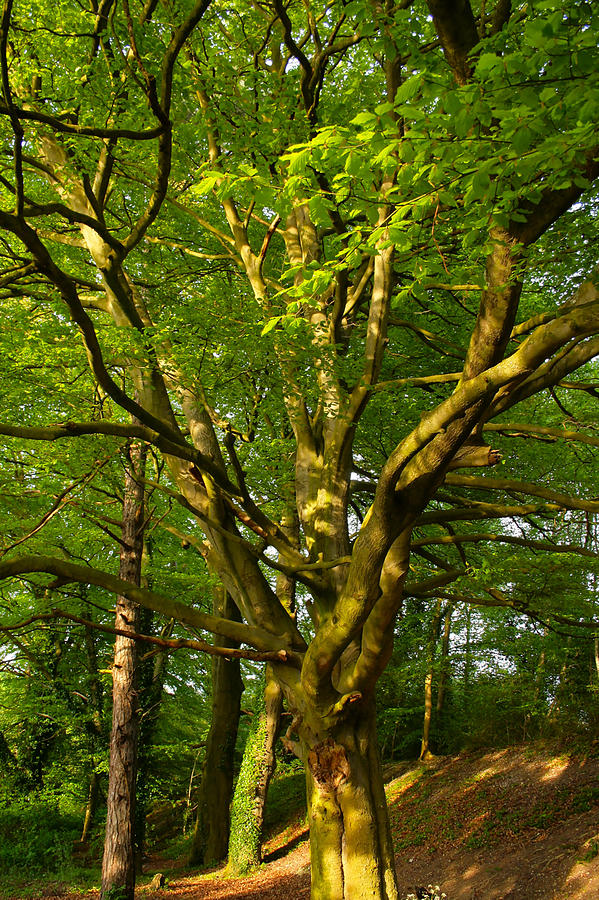 Tree Photograph - On The Way To St. Catherines Hill by Joshua Ackerman