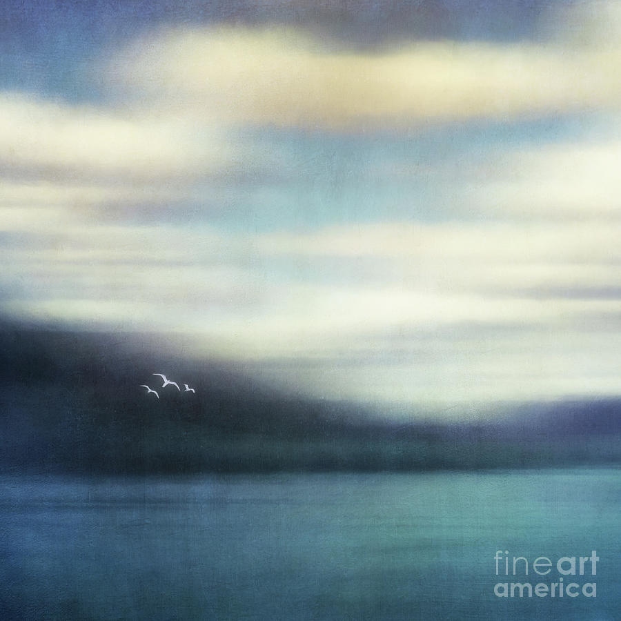 Seagul Photograph - On The Wing by Priska Wettstein